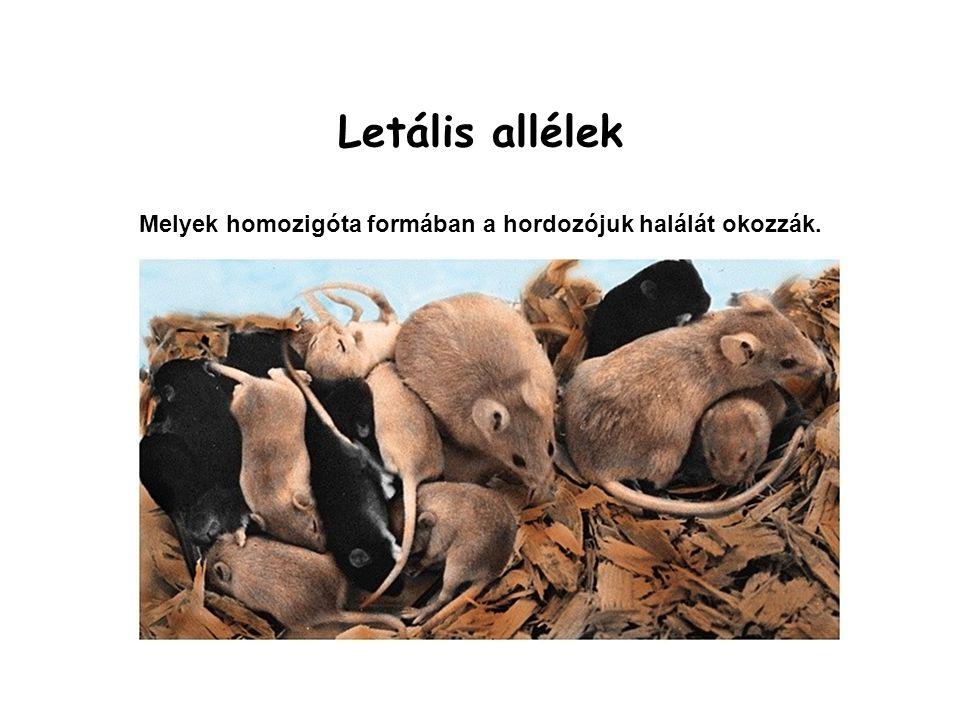 Allélizmus megállapítása Ugyanazon fenotípus jelleg különböző változatait (pl: barna és fekete szőrszín) okozhatják 1., ugyanazon gén allélváltozatai, 2., különböző gének változatai.