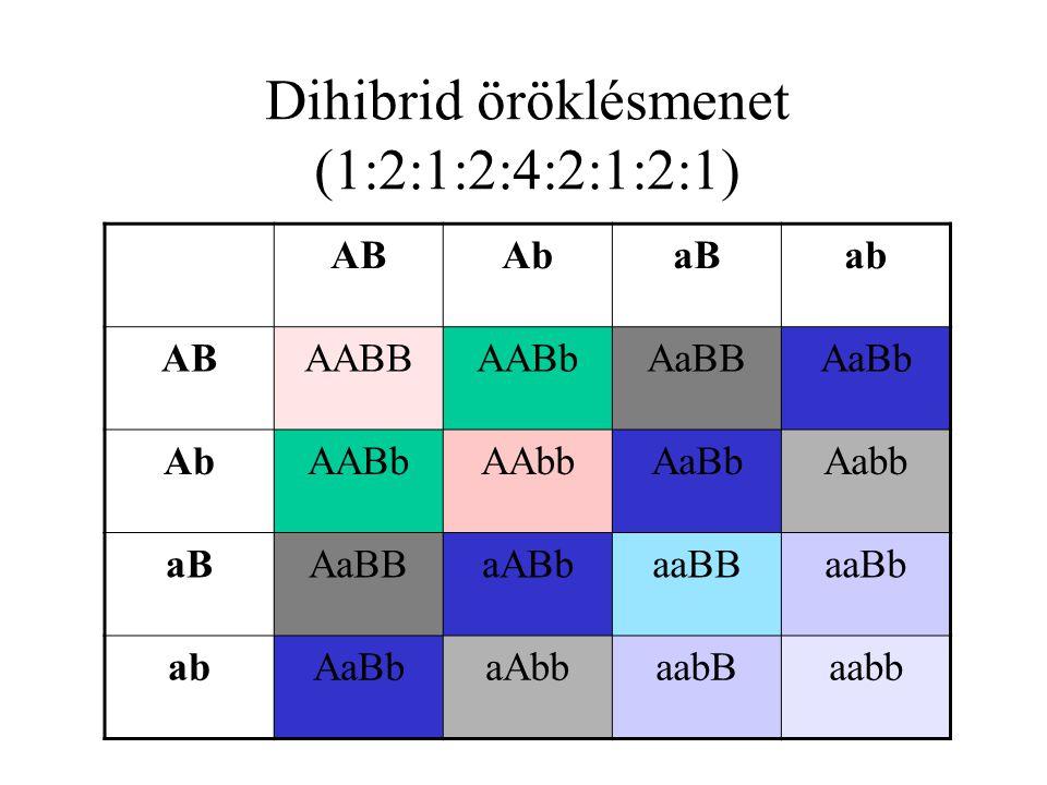 9/16 1/16 3/16 R:Y R:y r:Yr:y R:y r:Y r:y RR:YY Rr:Yy RR:Yy RR:yy rr:YyRr:yy Rr:YY Rr:Yyrr:YY Rr:Yy RR:YyRr:YY Rr:Yy Rr:yy rr:Yy rr:yy ivarsejtek F 1 Rr ; Yy Az F2 genotípusok Punnett táblája R- ; Y- R- ; yy rr ; Y- rr ; yy