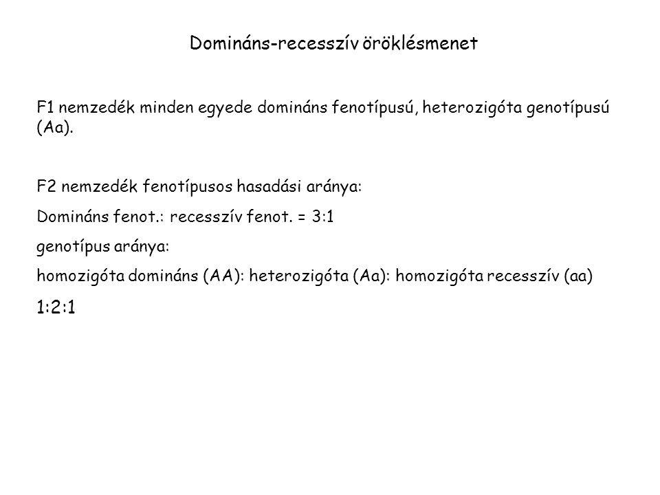 Domináns-recesszív öröklésmenet F1 nemzedék minden egyede domináns fenotípusú, heterozigóta genotípusú (Aa).