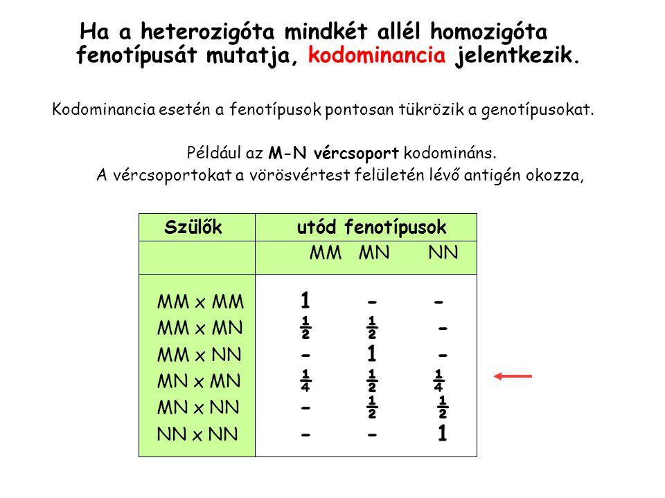 Kettős génhatás 15 1 9 bíbor 3 bíbor 1 fehér 9 A- B- 3 A- bb 3 aa B- 1 aa bb F2 x P F1 aa BBAA bb Aa Bb Minden genotípus, amiben A vagy B domináns allélja előfordul, színes fenotípusú.