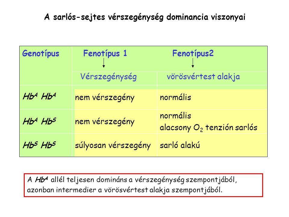 A sarlós-sejtes vérszegénység dominancia viszonyai nem vérszegénynormális Hb A Hb S nem vérszegény normális alacsony O 2 tenzión sarlós Hb S súlyosan vérszegénysarló alakú Genotípus Fenotípus 1 Fenotípus2 Vérszegénység vörösvértest alakja A Hb A allél teljesen domináns a vérszegénység szempontjából, azonban intermedier a vörösvértest alakja szempontjából.
