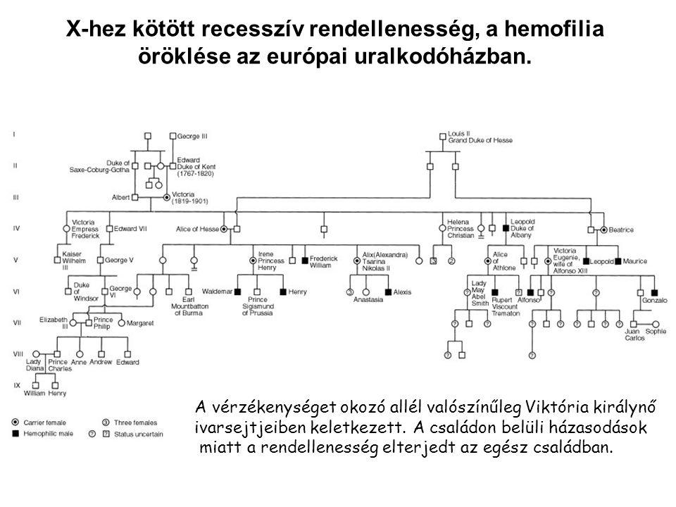X-hez kötött recesszív rendellenesség, a hemofilia öröklése az európai uralkodóházban. A vérzékenységet okozó allél valószínűleg Viktória királynő iva