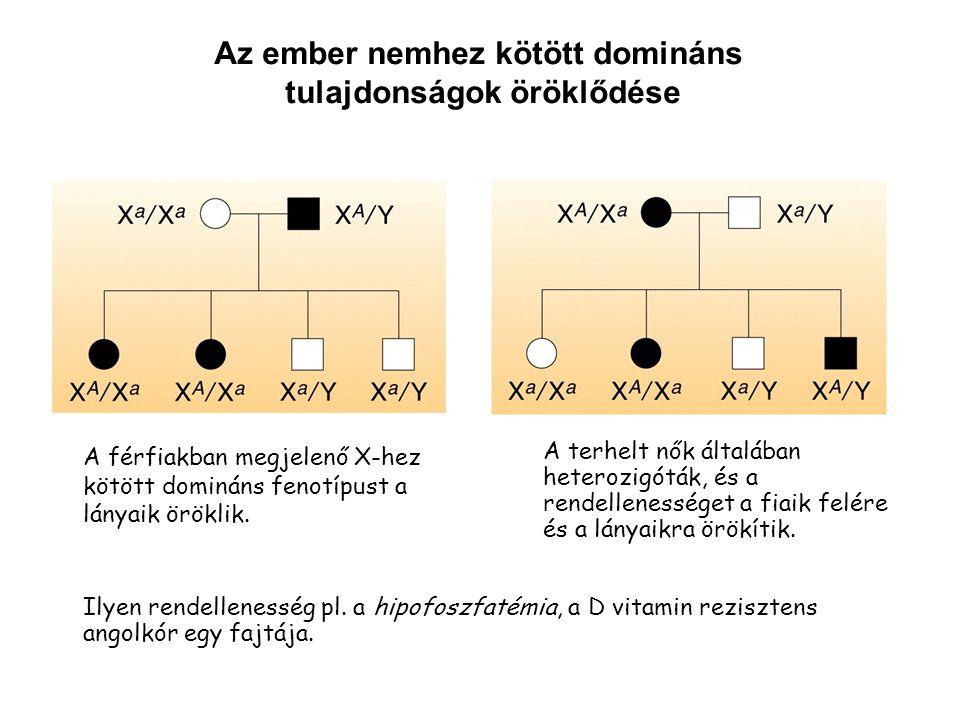 A férfiakban megjelenő X-hez kötött domináns fenotípust a lányaik öröklik. Az ember nemhez kötött domináns tulajdonságok öröklődése A terhelt nők álta