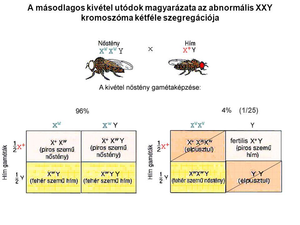 A másodlagos kivétel utódok magyarázata az abnormális XXY kromoszóma kétféle szegregációja (1/25)