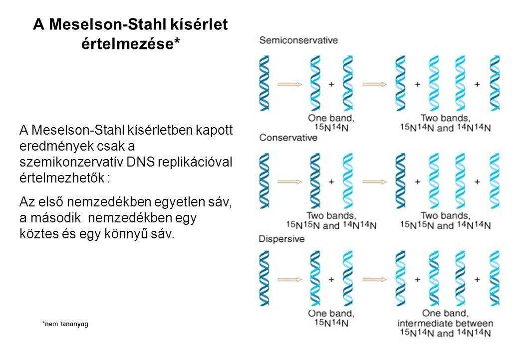 A Meselson-Stahl kísérlet értelmezése* A Meselson-Stahl kísérletben kapott eredmények csak a szemikonzervatív DNS replikációval értelmezhetők : Az els