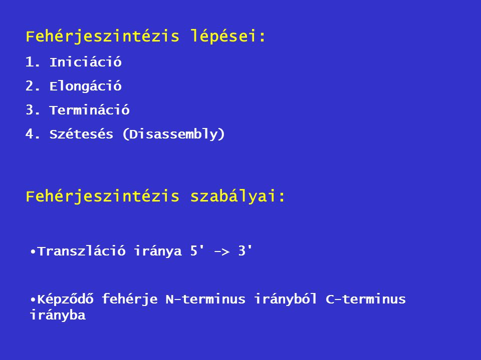 Fehérjeszintézis lépései: 1.Iniciáció 2.Elongáció 3.Termináció 4.Szétesés (Disassembly) Fehérjeszintézis szabályai: Transzláció iránya 5' -> 3' Képződ
