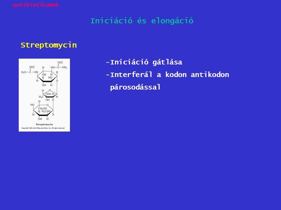 -Iniciáció gátlása -Interferál a kodon antikodon párosodással Streptomycin Iniciáció és elongáció antibiotikumok