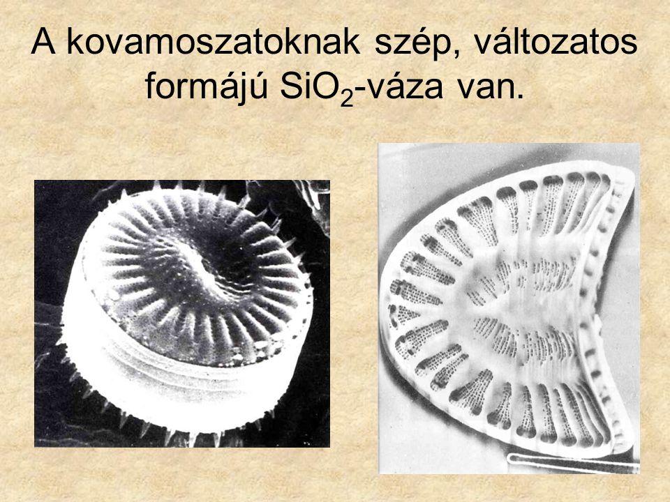 A kovamoszatoknak szép, változatos formájú SiO 2 -váza van.