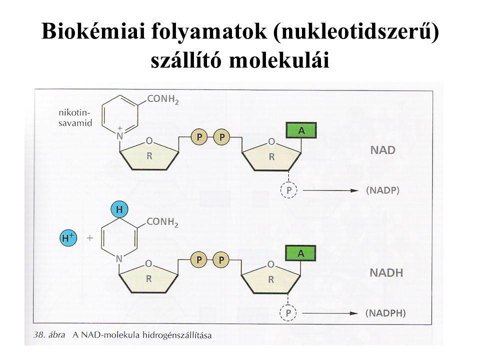 Biokémiai folyamatok (nukleotidszerű) szállító molekulái