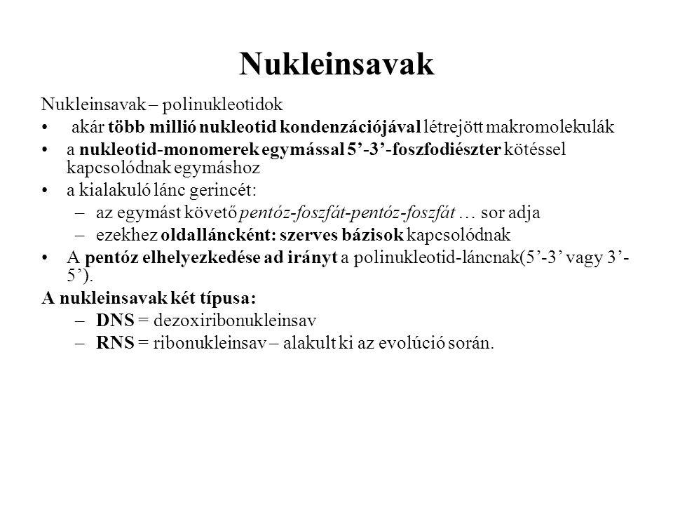 Nukleinsavak Nukleinsavak – polinukleotidok akár több millió nukleotid kondenzációjával létrejött makromolekulák a nukleotid-monomerek egymással 5'-3'-foszfodiészter kötéssel kapcsolódnak egymáshoz a kialakuló lánc gerincét: –az egymást követő pentóz-foszfát-pentóz-foszfát … sor adja –ezekhez oldalláncként: szerves bázisok kapcsolódnak A pentóz elhelyezkedése ad irányt a polinukleotid-láncnak(5'-3' vagy 3'- 5').