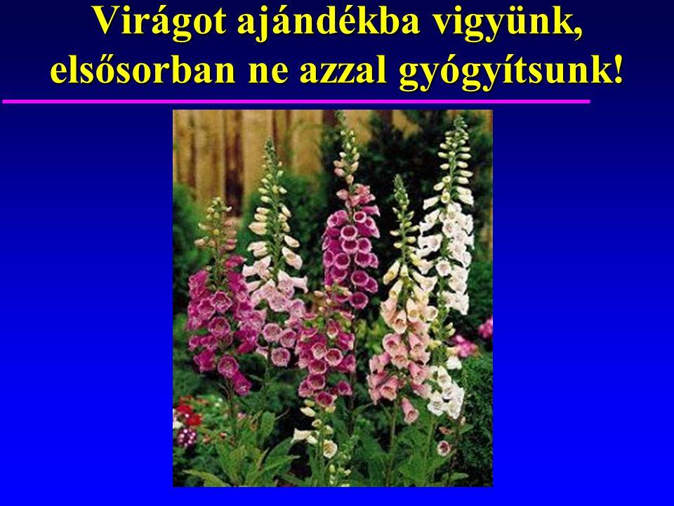 Virágot ajándékba vigyünk, elsősorban ne azzal gyógyítsunk!