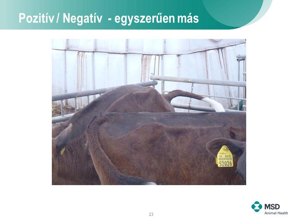 23 Pozitív / Negatív - egyszerűen más
