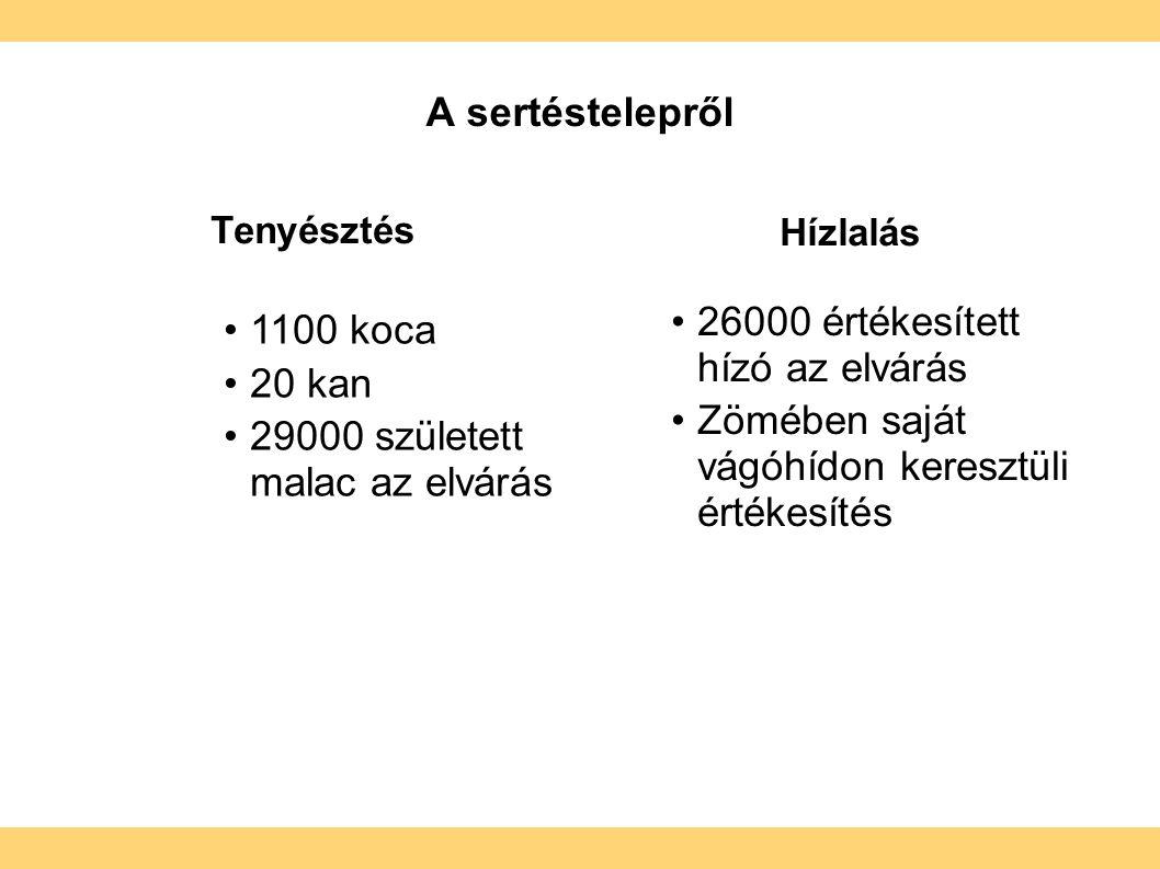 A sertéstelepről Tenyésztés Hízlalás  1100 koca 20 kan 29000 született malac az elvárás 26000 értékesített hízó az elvárás Zömében saját vágóhídon keresztüli értékesítés