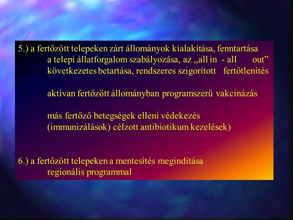 """5.) a fertőzött telepeken zárt állományok kialakítása, fenntartása a telepi állatforgalom szabályozása, az """"all in - allout következetes betartása, rendszeres szigorított fertőtlenítés aktívan fertőzött állományban programszerű vakcinázás más fertőző betegségek elleni védekezés (immunizálások) célzott antibiotikum kezelések) 6.) a fertőzött telepeken a mentesítés megindítása regionális programmal"""