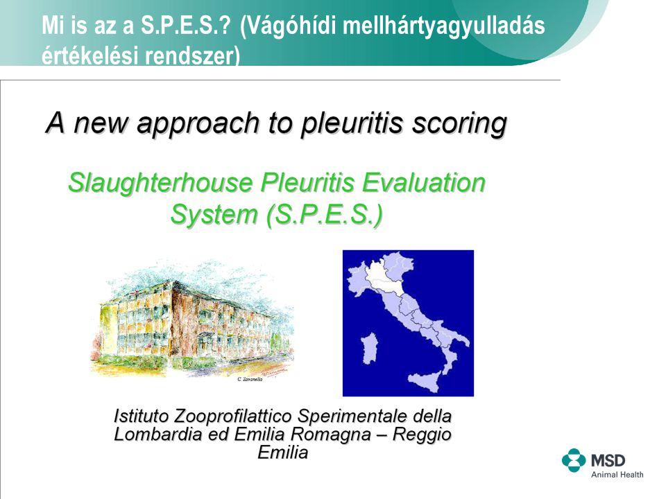 4 Mi is az a S.P.E.S.? (Vágóhídi mellhártyagyulladás értékelési rendszer)