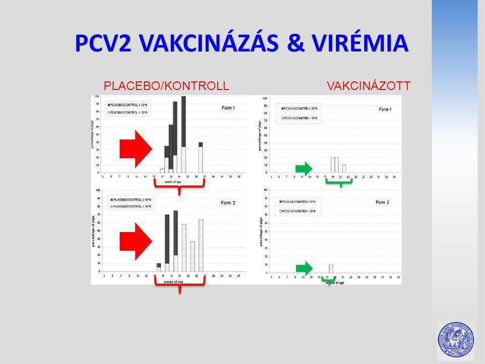 PCV2 VAKCINÁZÁS & VIRÉMIA PLACEBO/KONTROLL VAKCINÁZOTT