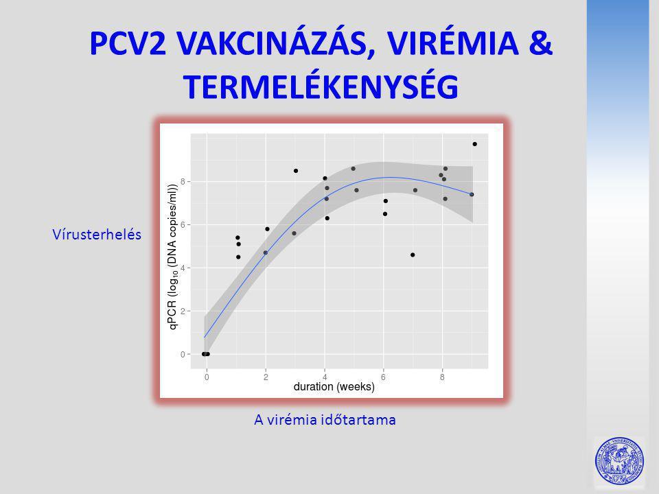 PCV2 VAKCINÁZÁS, VIRÉMIA & TERMELÉKENYSÉG Vírusterhelés A virémia időtartama