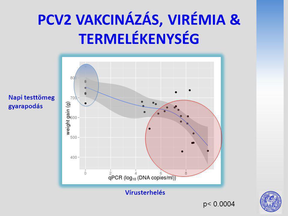 PCV2 VAKCINÁZÁS, VIRÉMIA & TERMELÉKENYSÉG p< 0.0004 Vírusterhelés Napi testtömeg gyarapodás
