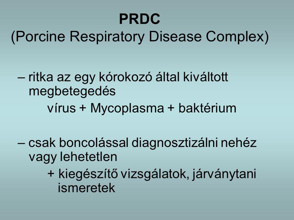 PRDC (Porcine Respiratory Disease Complex) – ritka az egy kórokozó által kiváltott megbetegedés vírus + Mycoplasma + baktérium – csak boncolással diagnosztizálni nehéz vagy lehetetlen + kiegészítő vizsgálatok, járványtani ismeretek