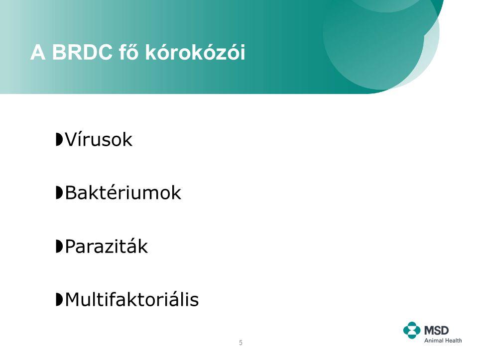 5  Vírusok  Baktériumok  Paraziták  Multifaktoriális A BRDC fő kórokózói