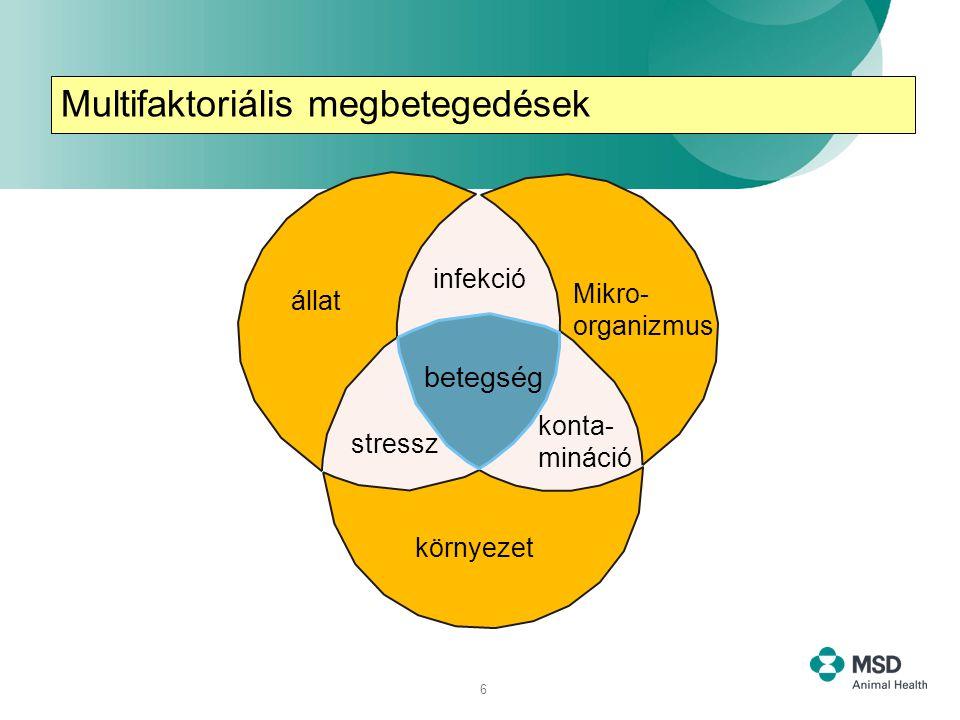 6 infekció Mikro- organizmus állat konta- mináció stressz betegség környezet Multifaktoriální onemocnění Multifaktoriális megbetegedések