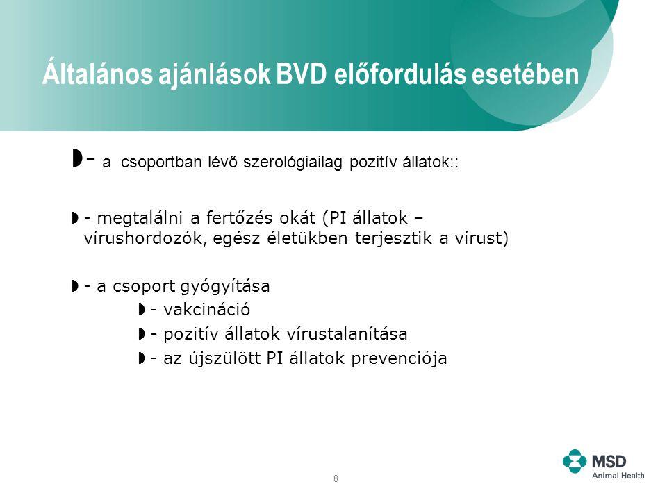 8  - a csoportban lévő szerológiailag pozitív állatok::  - megtalálni a fertőzés okát (PI állatok – vírushordozók, egész életükben terjesztik a vírust)  - a csoport gyógyítása  - vakcináció  - pozitív állatok vírustalanítása  - az újszülött PI állatok prevenciója Általános ajánlások BVD előfordulás esetében