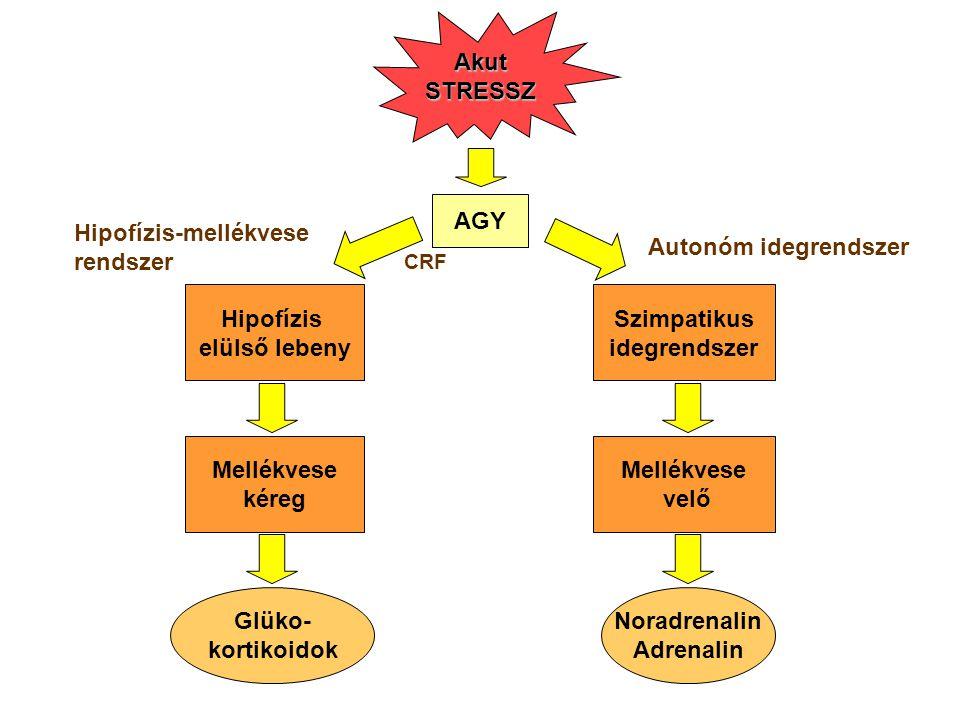 A harcolj, vagy menekülj válasz kialakulásának kettős szabályozása Két rendszer aktivációjából fakadnak a fiziológiai reakciók: szimpatikus idegrendszer adrenokortikális rendszer.