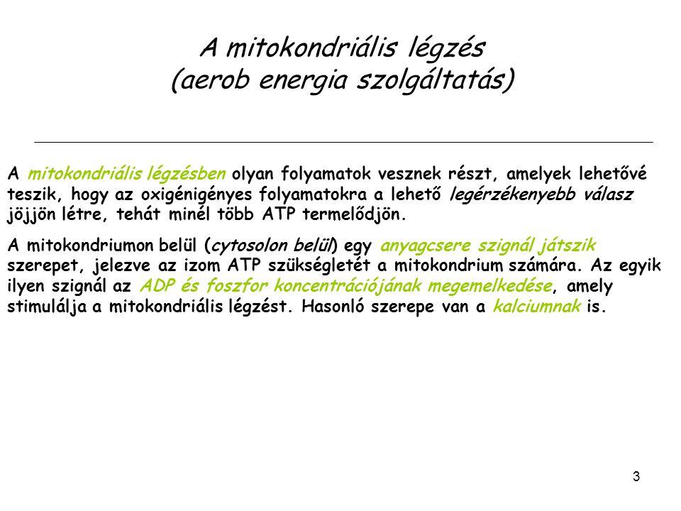 Az első 30 másodpercben a legtöbb ATP a kreatin foszfát hidrolíziséből származik.