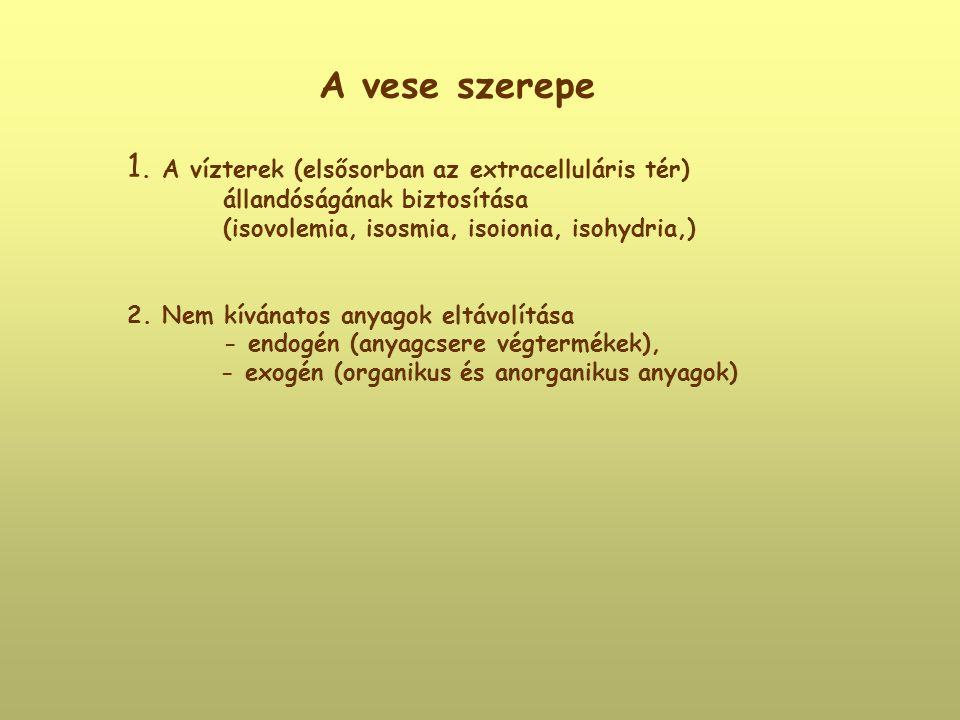 A vese szerepe 1. A vízterek (elsősorban az extracelluláris tér) állandóságának biztosítása (isovolemia, isosmia, isoionia, isohydria,) 2. Nem kívánat