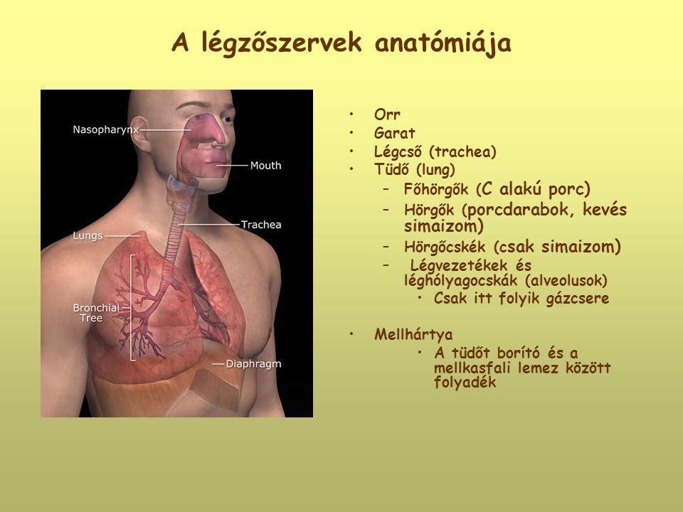 A légzőszervek anatómiája Orr Garat Légcső (trachea) Tüdő (lung) –Főhörgők ( C alakú porc) –Hörgők ( porcdarabok, kevés simaizom) –Hörgőcskék (c sak s