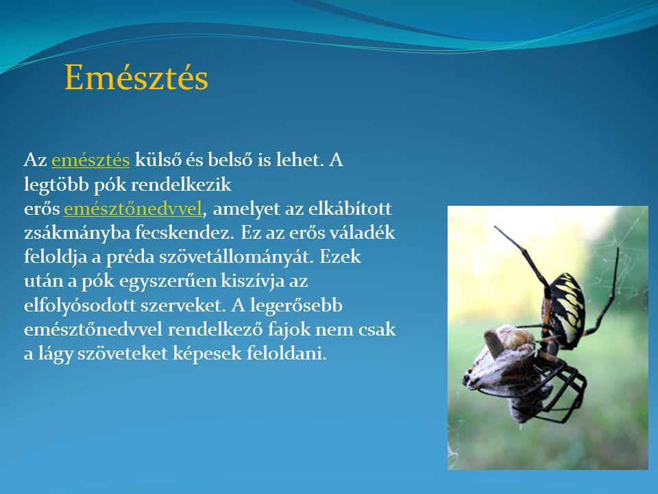 Az emésztés külső és belső is lehet. A legtöbb pók rendelkezik erős emésztőnedvvel, amelyet az elkábított zsákmányba fecskendez. Ez az erős váladék fe