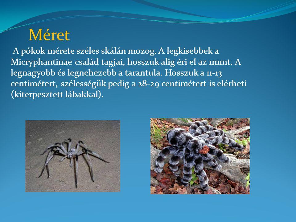 A pókok mérete széles skálán mozog. A legkisebbek a Micryphantinae család tagjai, hosszuk alig éri el az 1mmt. A legnagyobb és legnehezebb a tarantula