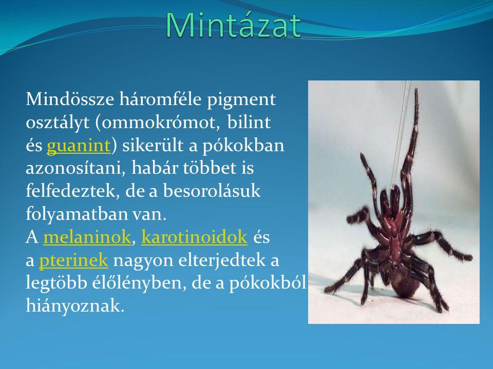 Mindössze háromféle pigment osztályt (ommokrómot, bilint és guanint) sikerült a pókokban azonosítani, habár többet is felfedeztek, de a besorolásuk folyamatban van.