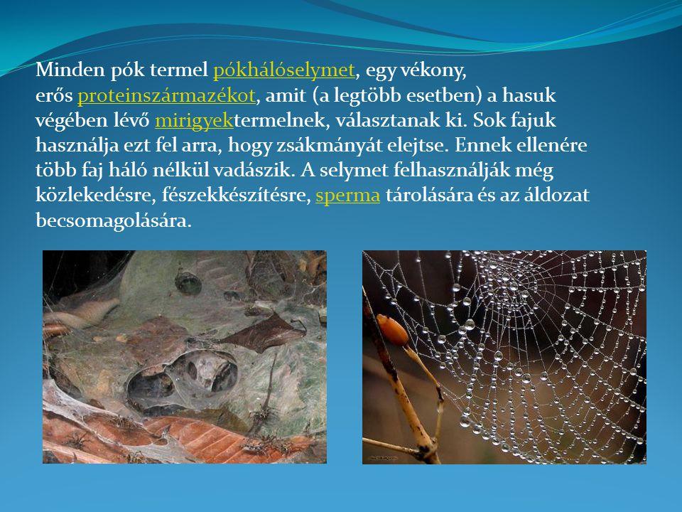 Minden pók termel pókhálóselymet, egy vékony, erős proteinszármazékot, amit (a legtöbb esetben) a hasuk végében lévő mirigyektermelnek, választanak ki