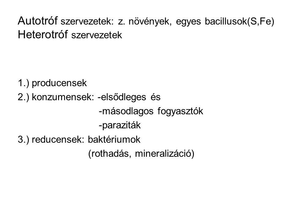 Autotróf szervezetek: z. növények, egyes bacillusok(S,Fe) Heterotróf szervezetek 1.) producensek 2.) konzumensek: -elsődleges és -másodlagos fogyasztó