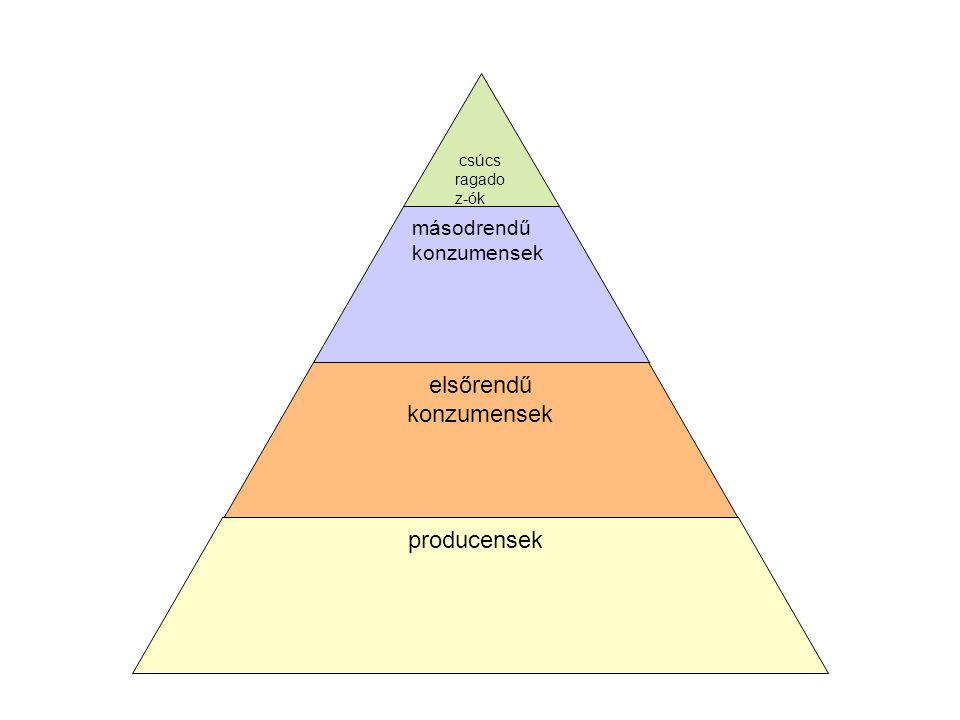 csúcs ragado z-ók másodrendű konzumensek elsőrendű konzumensek producensek