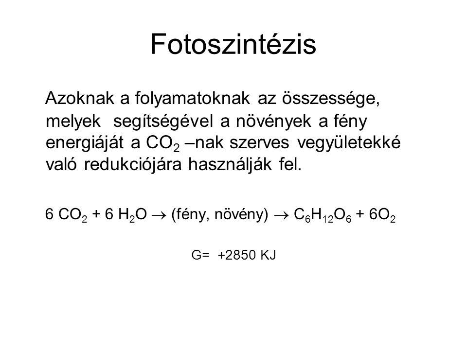 Fotoszintézis Azoknak a folyamatoknak az összessége, melyek segítségével a növények a fény energiáját a CO 2 –nak szerves vegyületekké való redukciójára használják fel.