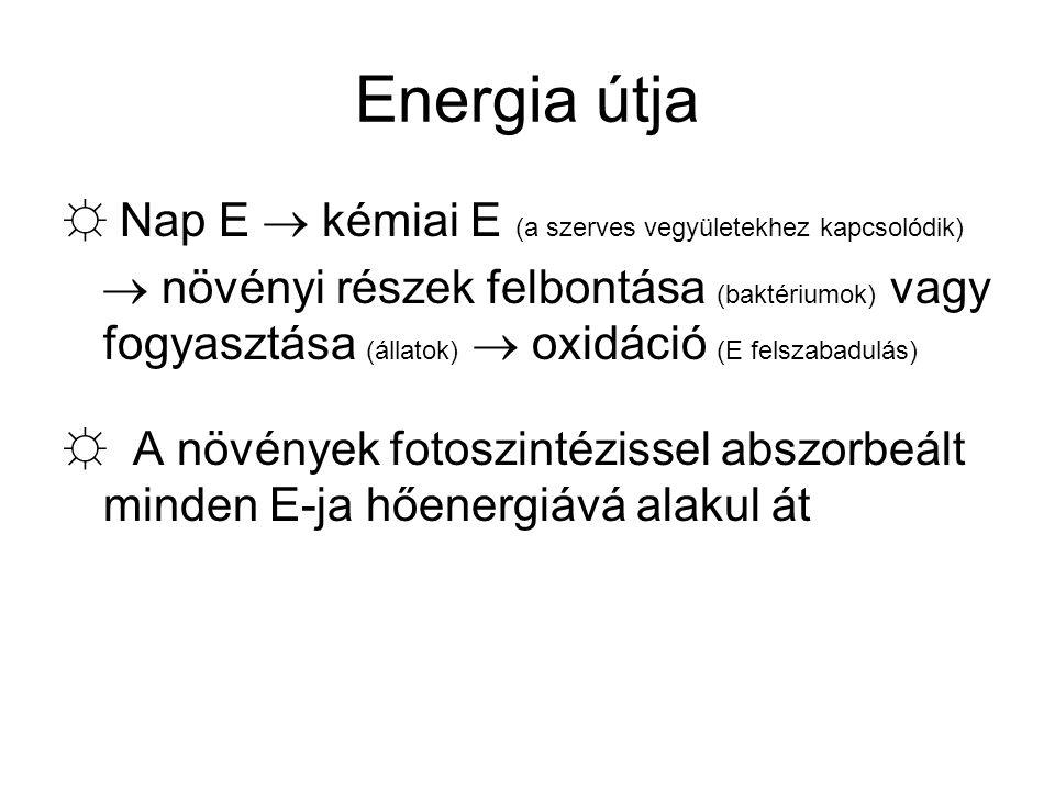 Energia útja ☼ Nap E  kémiai E (a szerves vegyületekhez kapcsolódik)  növényi részek felbontása (baktériumok) vagy fogyasztása (állatok)  oxidáció (E felszabadulás) ☼ A növények fotoszintézissel abszorbeált minden E-ja hőenergiává alakul át