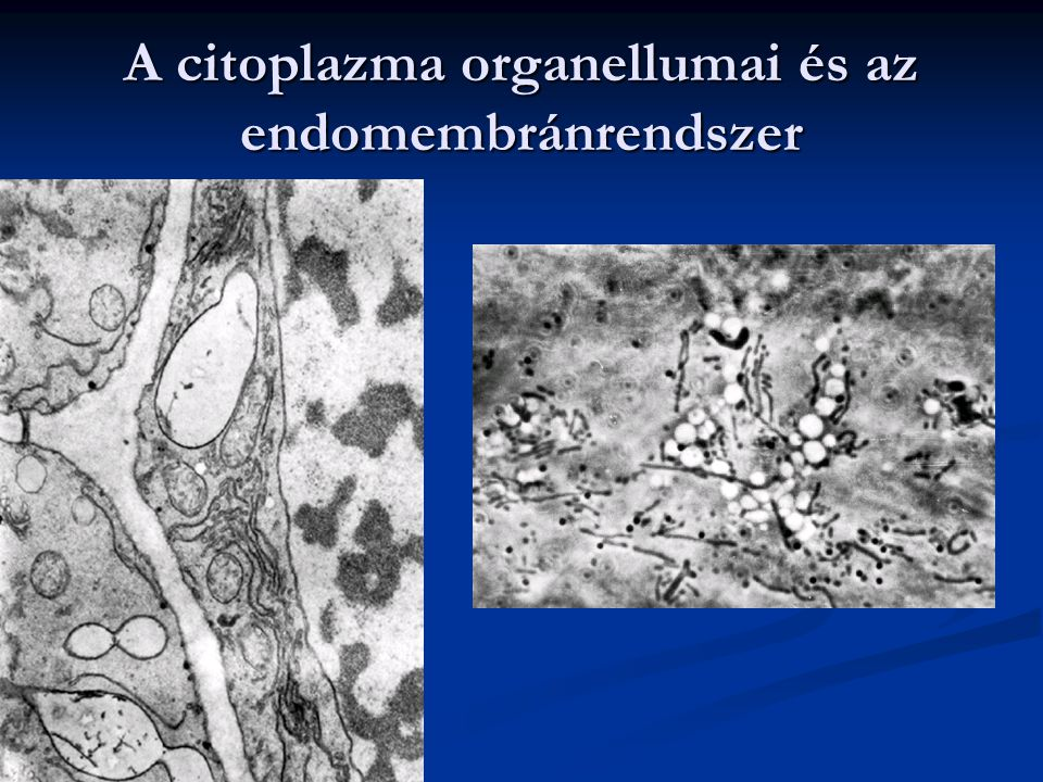 A citoplazma organellumai és az endomembránrendszer