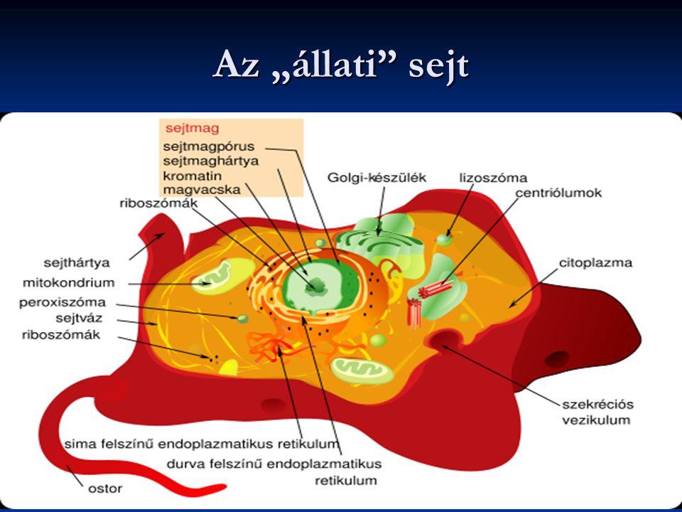 """Az """"állati"""" sejt"""