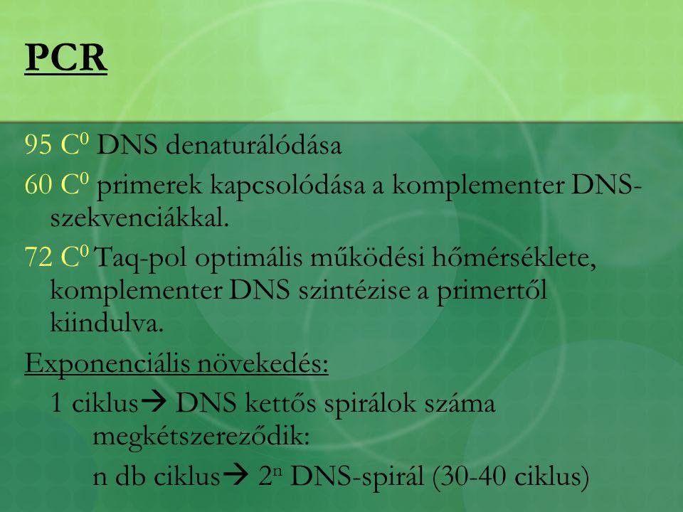PCR 95 C 0 DNS denaturálódása 60 C 0 primerek kapcsolódása a komplementer DNS- szekvenciákkal.