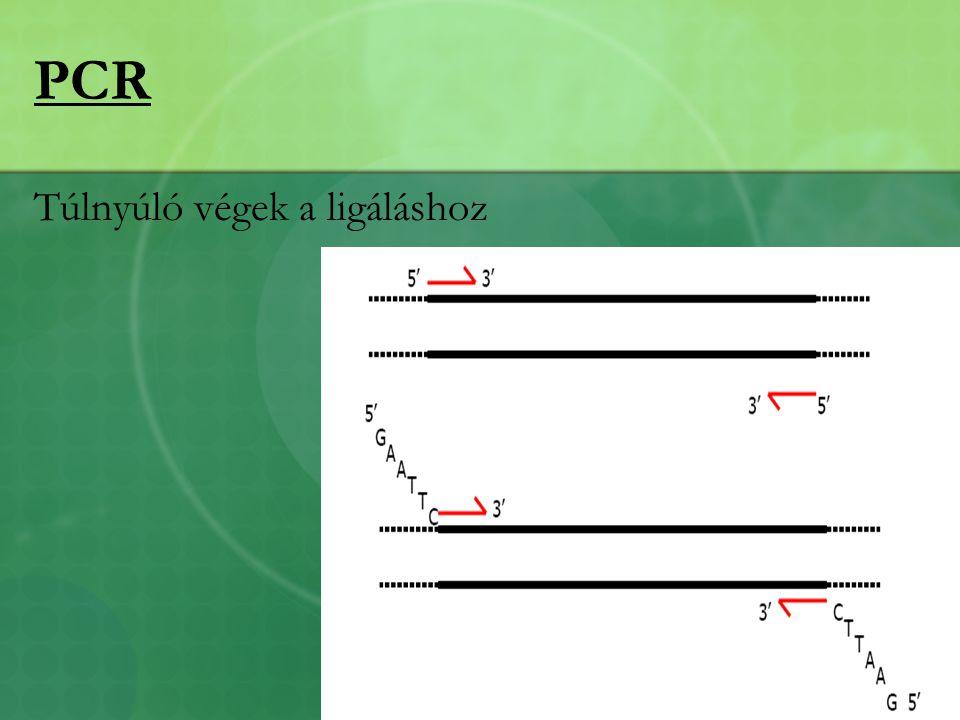 PCR Túlnyúló végek a ligáláshoz