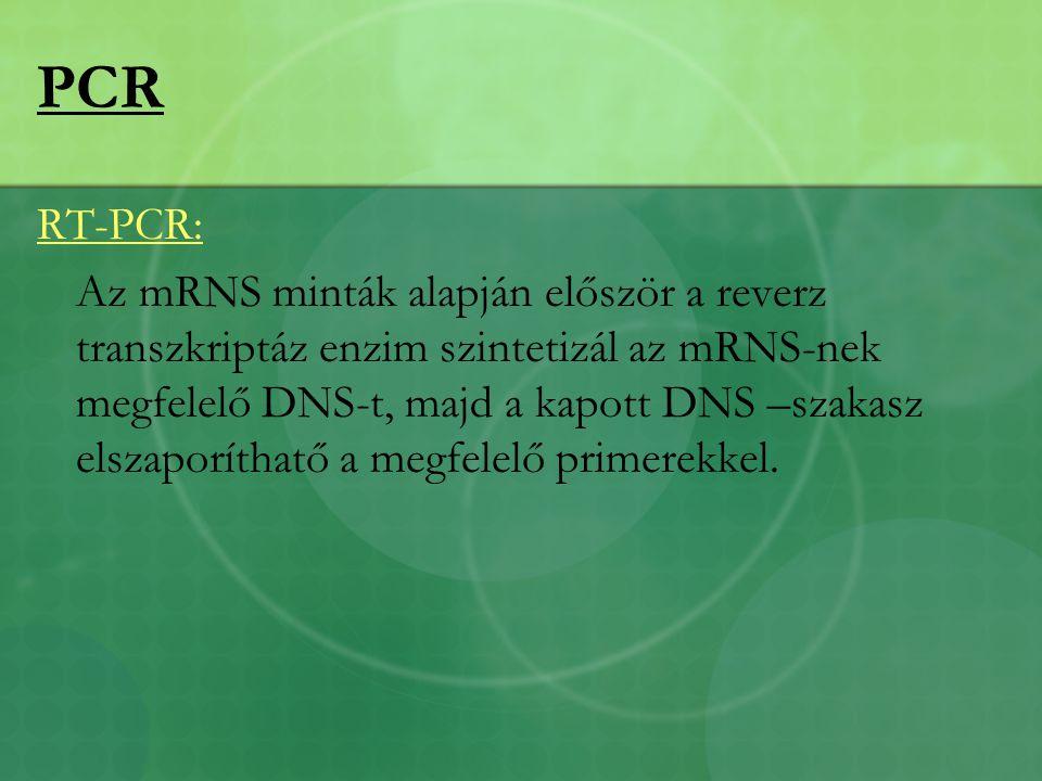 RT-PCR: Az mRNS minták alapján először a reverz transzkriptáz enzim szintetizál az mRNS-nek megfelelő DNS-t, majd a kapott DNS –szakasz elszaporíthatő a megfelelő primerekkel.