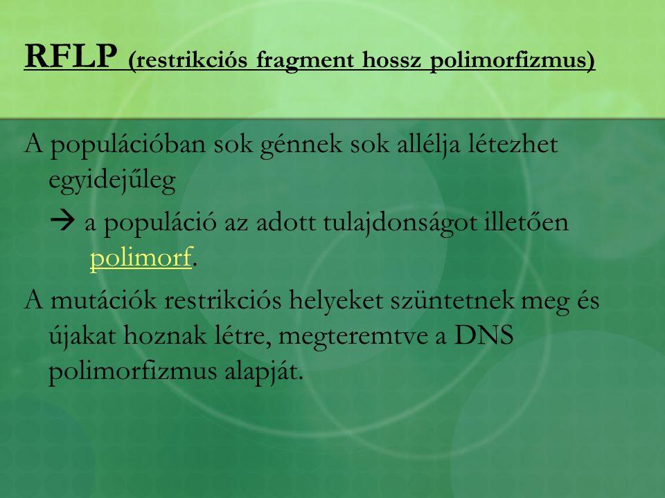 RFLP (restrikciós fragment hossz polimorfizmus) A populációban sok génnek sok allélja létezhet egyidejűleg  a populáció az adott tulajdonságot illetően polimorf.