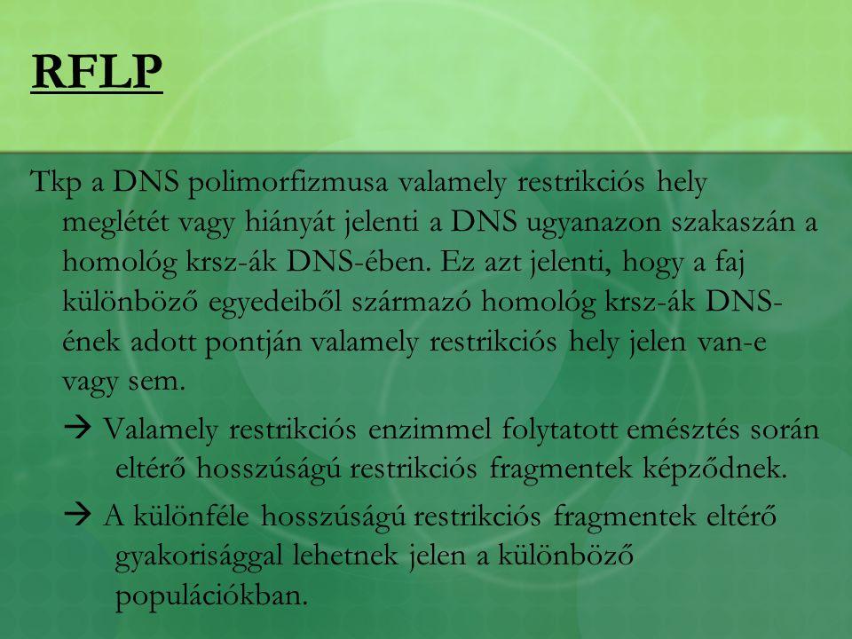 RFLP Tkp a DNS polimorfizmusa valamely restrikciós hely meglétét vagy hiányát jelenti a DNS ugyanazon szakaszán a homológ krsz-ák DNS-ében.