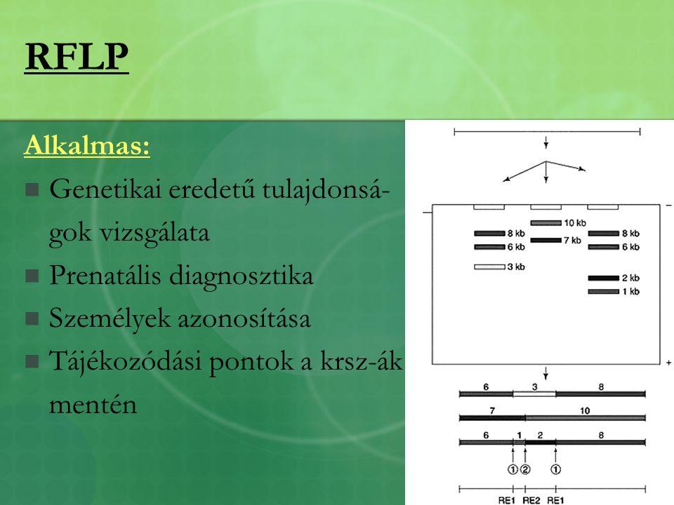 RFLP Alkalmas: Genetikai eredetű tulajdonsá- gok vizsgálata Prenatális diagnosztika Személyek azonosítása Tájékozódási pontok a krsz-ák mentén