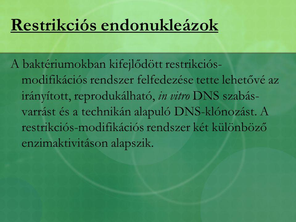 Restrikciós endonukleázok A baktériumokban kifejlődött restrikciós- modifikációs rendszer felfedezése tette lehetővé az irányított, reprodukálható, in vitro DNS szabás- varrást és a technikán alapuló DNS-klónozást.