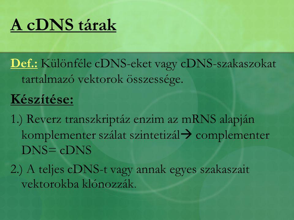 A cDNS tárak Def.: Különféle cDNS-eket vagy cDNS-szakaszokat tartalmazó vektorok összessége.
