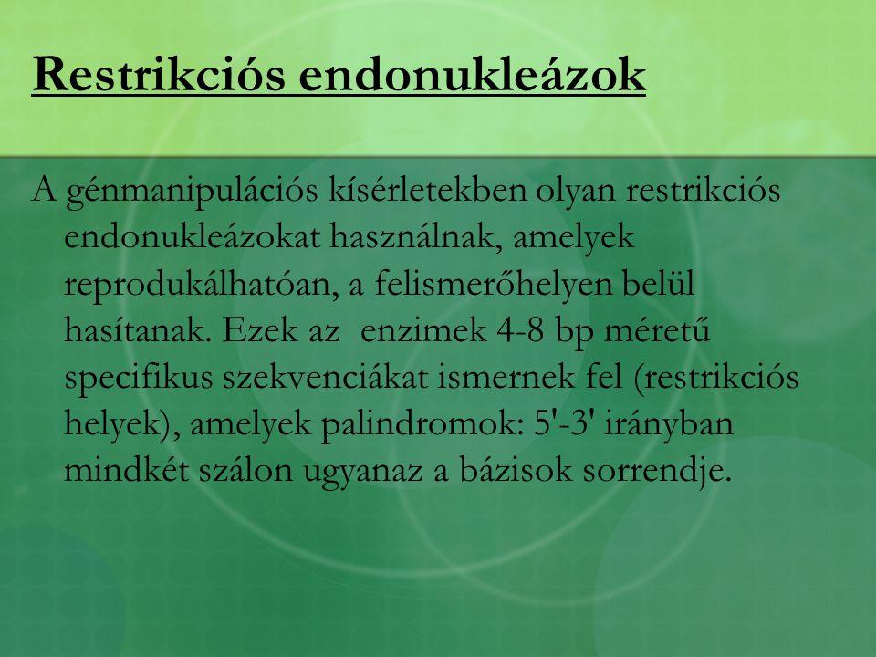 Restrikciós endonukleázok A génmanipulációs kísérletekben olyan restrikciós endonukleázokat használnak, amelyek reprodukálhatóan, a felismerőhelyen belül hasítanak.