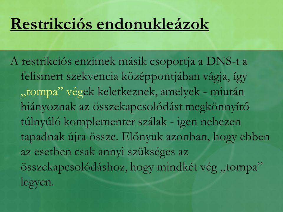 """Restrikciós endonukleázok A restrikciós enzimek másik csoportja a DNS-t a felismert szekvencia középpontjában vágja, így """"tompa végek keletkeznek, amelyek - miután hiányoznak az összekapcsolódást megkönnyítő túlnyúló komplementer szálak - igen nehezen tapadnak újra össze."""